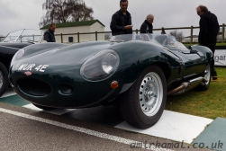Jaguar D-type shortnose